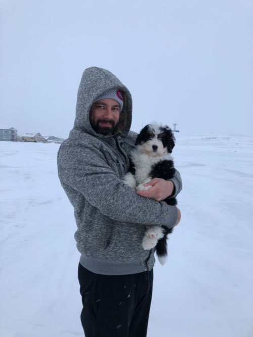 ship bernedoodle puppy Canada